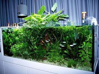 Бизнес выращивание в аквариуме 278