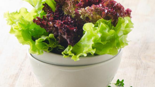 Листовои салат-фото