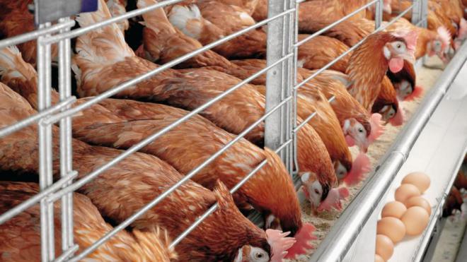 Картинки по запросу украина аграрная страна птицефабрики