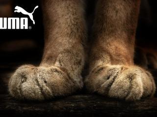 История успеха Puma. Бренд с кошачьим нравом  515893656f728
