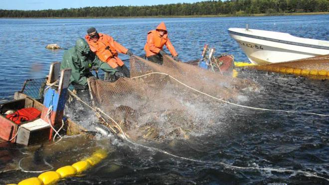 рыбалка на сахалине на сетями