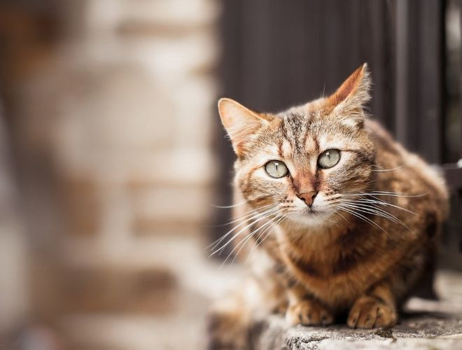 В Киеве решили признать котов частью экосистемы города