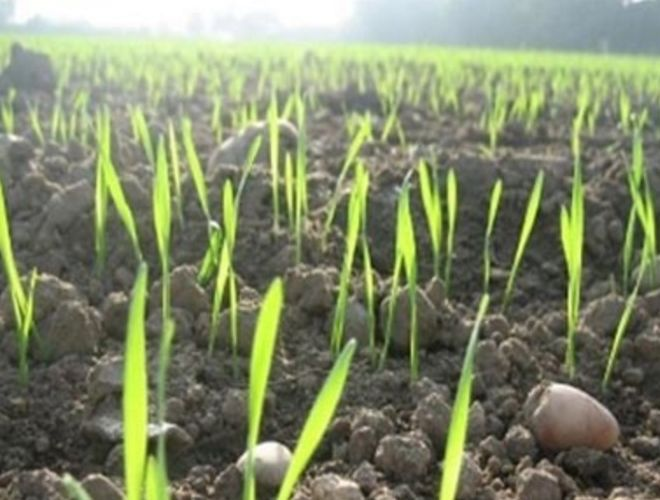 Украинские аграрии снова делают ставку на выращивание озимых зерновых