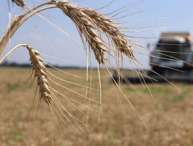 На какие дотации рассчитывать украинским аграриям в 2017 году