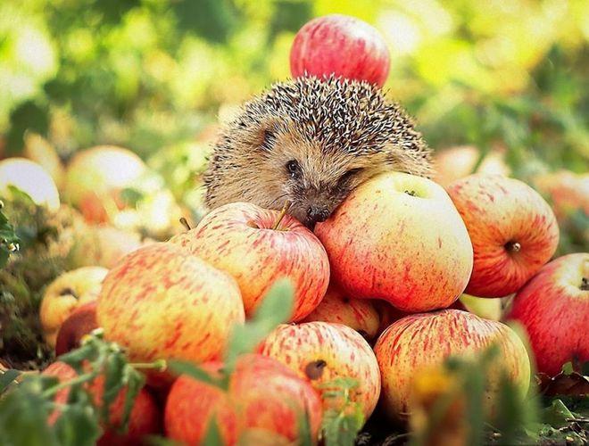 В Украине начали снижаться цены на яблоки
