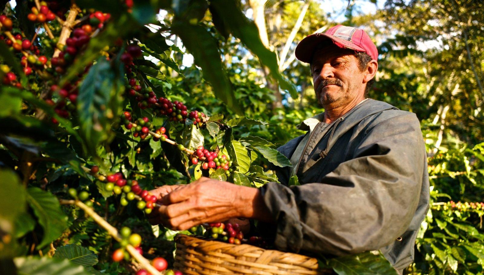 Бразильские производители кофе переключаются на перец