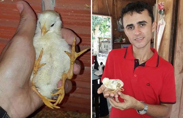 На бразильской ферме родился цыплёнок с четырьмя лапами