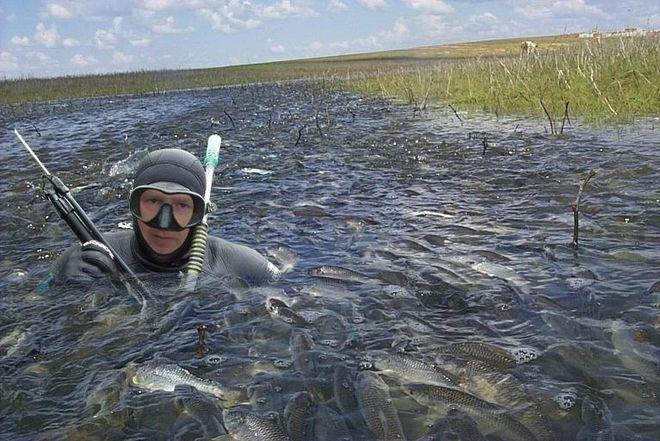 В ряде областей Украины запретили ловить рыбу