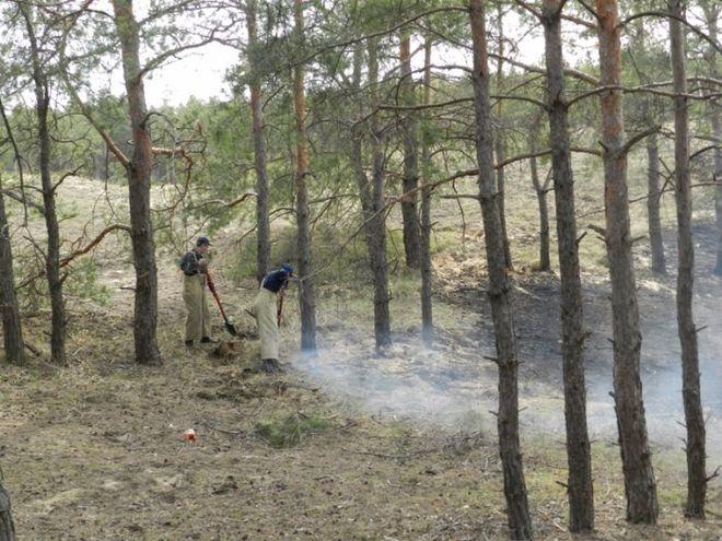 В Украине могут ужесточить наказание за вырубку лесов