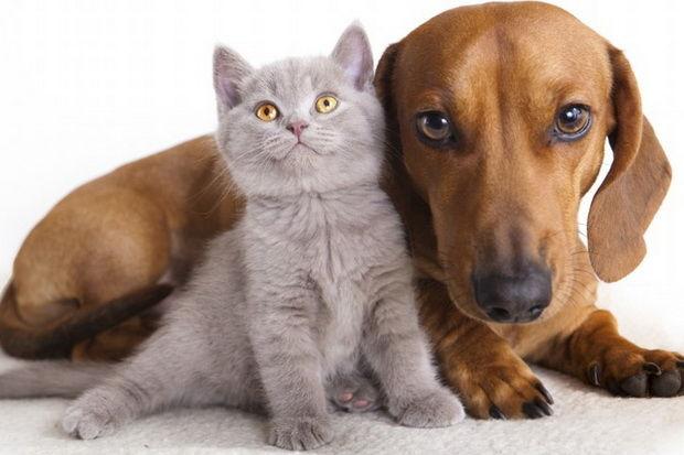 На Тайване будут штрафовать за употребление кошек и собак
