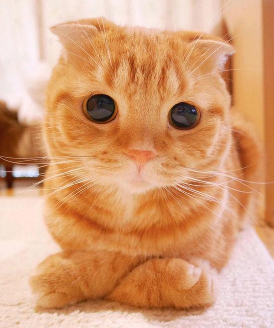 Показали самых красивых кошек в мире