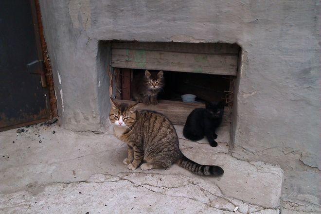 В Киеве котам официально разрешили жить в подвалах