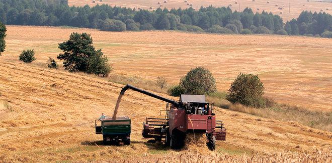 Американцы спрогнозировали украинский урожай