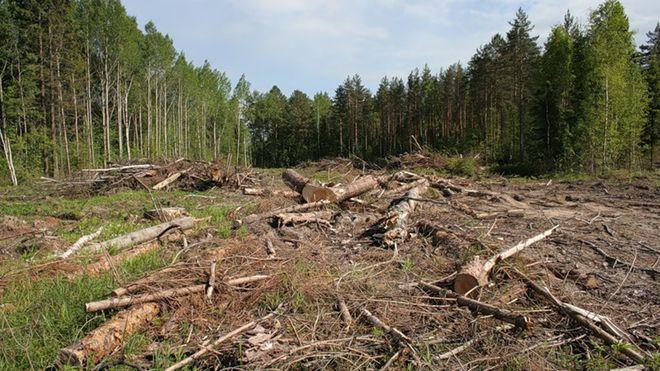 В Украине появилась уникальная система мониторинга лесов