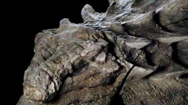 В Канаде показали сохранившиеся останки динозавра