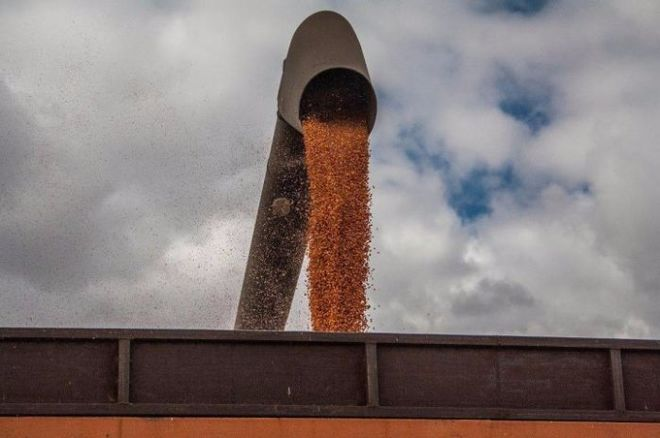 В Китае выростят меньше кукурузы