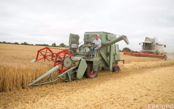 В Украине дешевеет пшеница