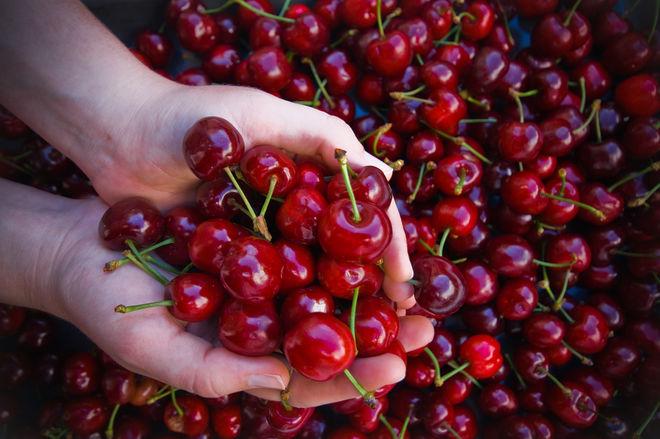 В Украине под угрозой оказался урожай черешни