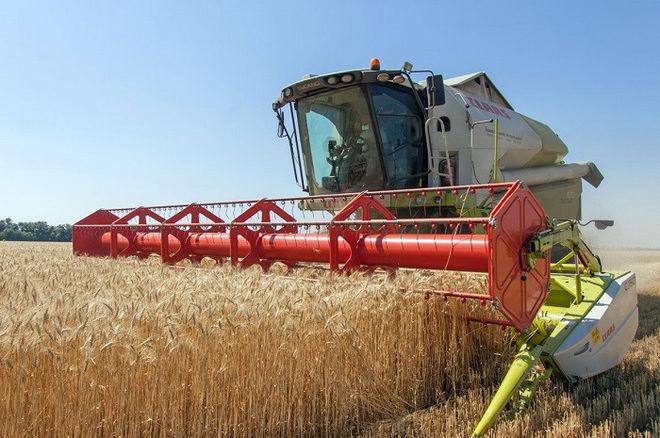 Названы главные проблемы зернового рынка Украины