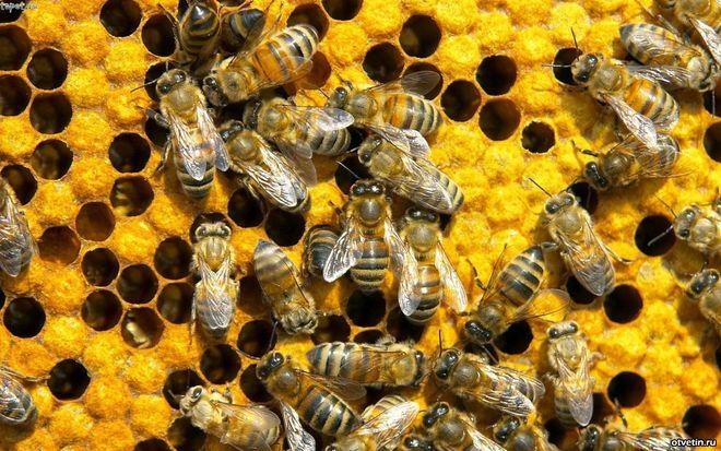 В Украине массово гибнут пчелы: производство меда под угрозой