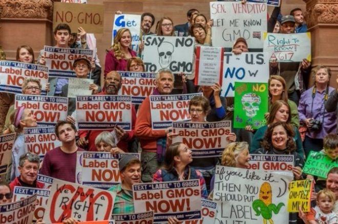 Ученые заверили наиболее масштабное исследование о вреде ГМО