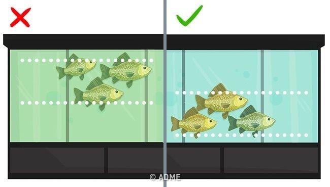 Названы 9 видов рыбы, которые не стоит есть