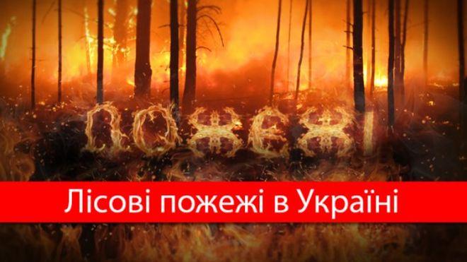 За год лесные пожары нанесли Украине колоссальный ущерб