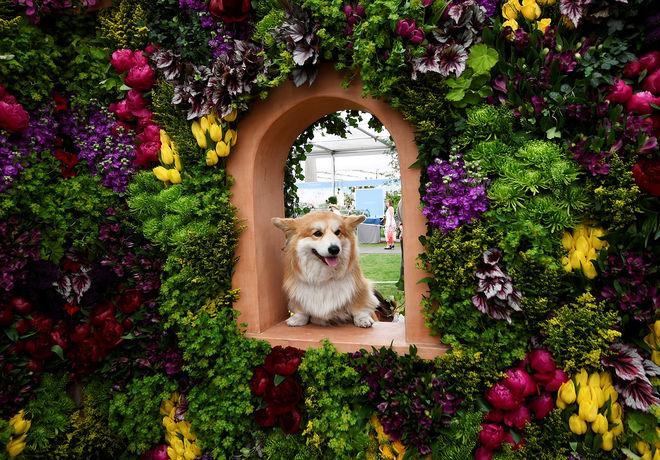 В Челси проходит фестиваль цветов