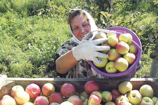 Украинским садоводам выделят деньги
