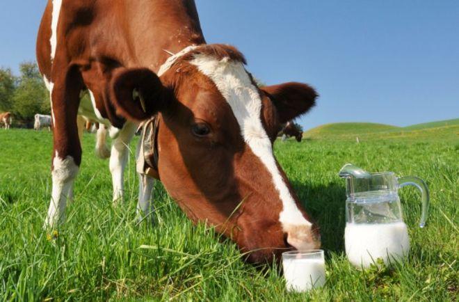 В Украине стабилизировались закупочные цены на молоко