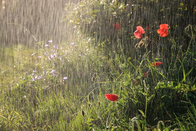 Украинцам обещают на завтра дожди