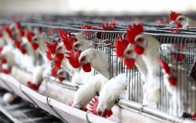 С начала года Украина почти на 50% увеличила экспорт мяса птицы