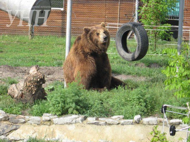В Украине работает центр спасения медведей