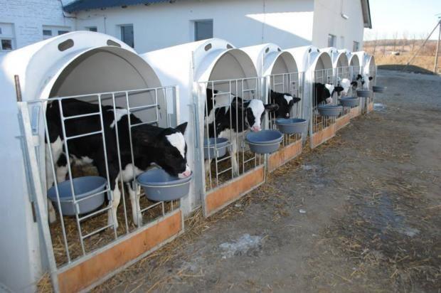 Датчане построят в Украине мясоперерабатывающий завод
