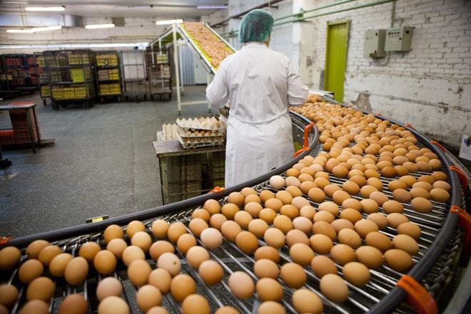 В Украине рентабельность производства яиц упала в 100 раз