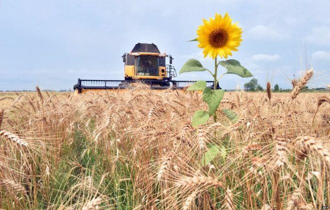 В Херсонской области открыли новый семенной завод