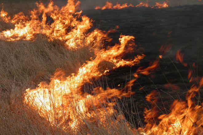 Украинцев предупреждают о высокой пожарной опасности