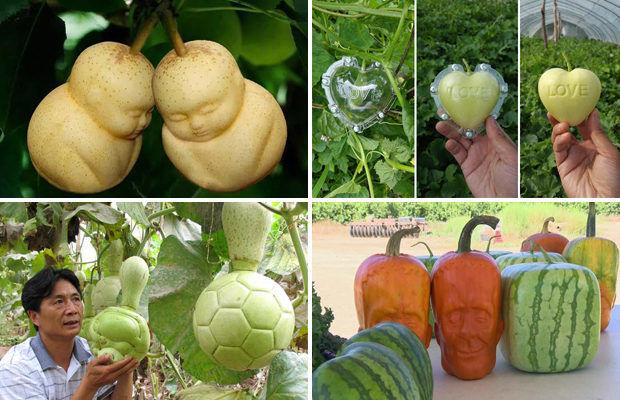 В Китае выращивают дизайнерские овощи и фрукты причудливых форм