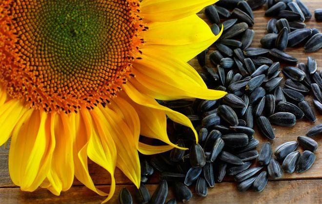 Картинки по запросу семена подсолнуха