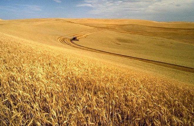 Как засуха повлияет на урожай зерна в Украине