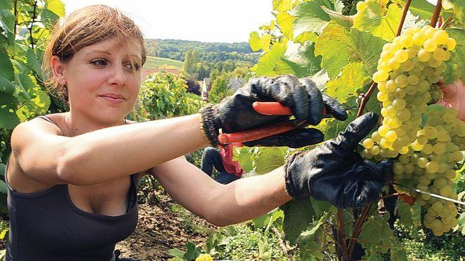 Сезонные мошенники: какие сюрпризы украинцам готовит рынок труда летом