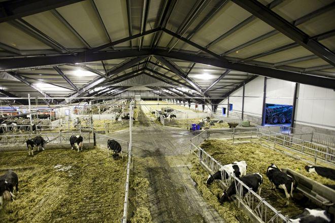 В Украине продают за долги фермы известной аграрной корпорации