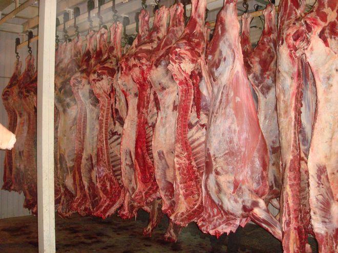 Египет может возобновить закупки украинского мяса КРС