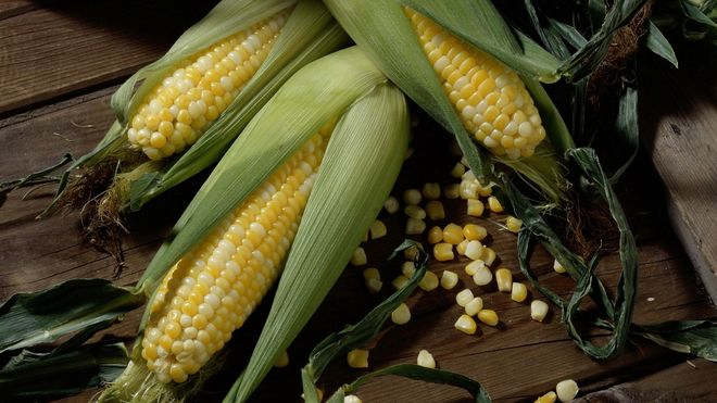 Сколько кукурузы Украина отправила на экспорт с начала года