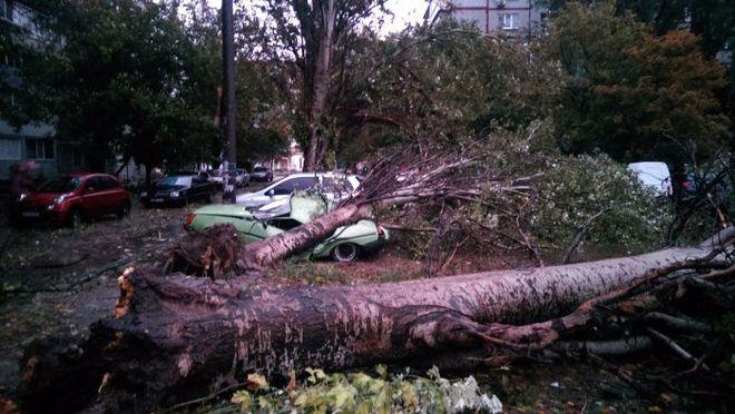 В ГСЧС назвали количество пострадавших от урагана