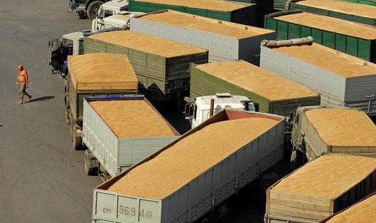 В мире сокращается производство пшеницы