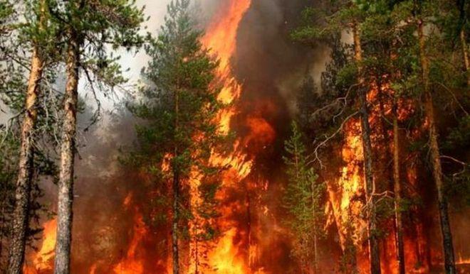 В Херсонской области горит лес