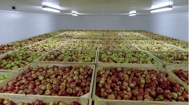 В Украину завезли очень много импортных яблок: побит 5-летний рекорд