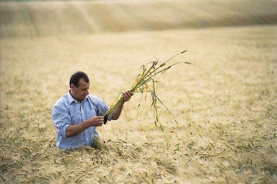 700 украинских агропроизводителей получили полмиллиона из бюджета