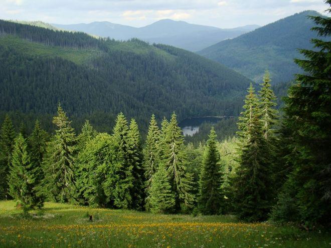 Карпатские леса отнесли к Всемирному наследию ЮНЕСКО
